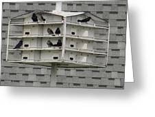 Bird Apartment House Greeting Card