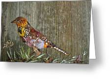 Bird Barbet Greeting Card