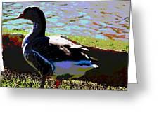Bird Greeting Card by David Alvarez