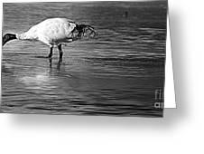 Bird Drinking Greeting Card