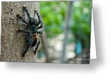 Bird-eater Tarantula / Tarantula Comedora De Aves Greeting Card