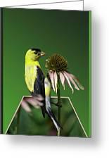 Bird Eating Seeds Greeting Card