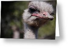 Bird Face Greeting Card