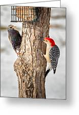 Bird Feeder Stand Off Greeting Card