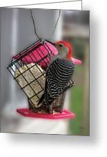 Bird Feeder Wp 06 Greeting Card