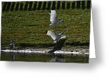 Bird Fight Greeting Card