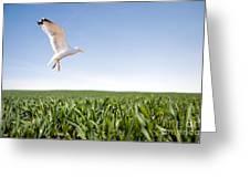 Bird Flying Over Green Grass Greeting Card