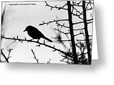 Bird In B And W Greeting Card