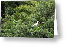 Bird In Bush Greeting Card