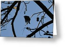 Bird In Flight Greeting Card