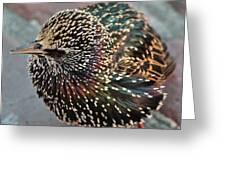 Bird In Seattle Greeting Card
