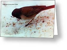 Bird In Snow 2 Greeting Card