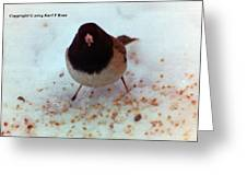 Bird In Snow Greeting Card