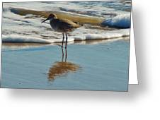 Bird In Surf Reflecting 12/14 Greeting Card