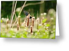 Bird In The Bull Rushes Greeting Card