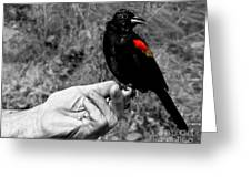 Bird In The Hand.seattle.bw Greeting Card