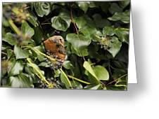 Bird In The Ivy Greeting Card