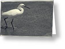Bird In The Water Greeting Card