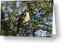 Bird In Trees Greeting Card