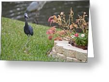 Bird In Yard Greeting Card