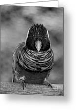 Bird In Your Face Bw Greeting Card