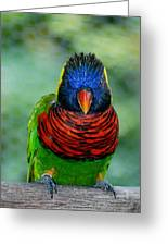 Bird In Your Face  Greeting Card