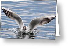 Bird Landing Greeting Card