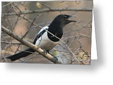 Bird Magpie Greeting Card
