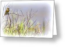 Bird - Migration - Dicksissel Greeting Card