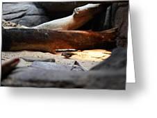 Bird - National Aquarium In Baltimore Md - 121216 Greeting Card
