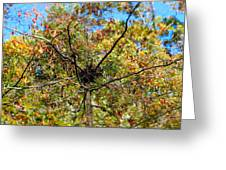 Bird Nest In A Tree Greeting Card