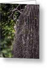 Bird Nest Tree Greeting Card