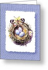 Bird Nest With Daisies Eggs And Butterfly Greeting Card