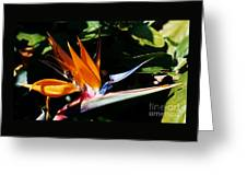 Grotto Bay Bird Of Paradise # 1 Greeting Card