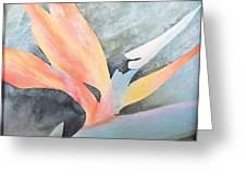 Bird Of Paradise 2 Greeting Card