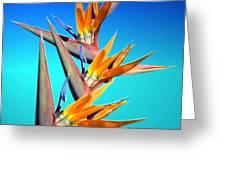 Bird Of Paradise 2013 Greeting Card