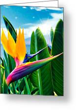 Bird Of Paradise 5 Greeting Card