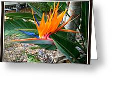 Bird Of Paradise Greeting Card by Bruce Kessler