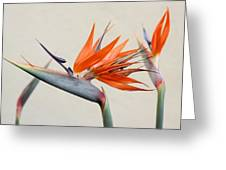 Bird Of Paradise Greeting Card by Denice Breaux