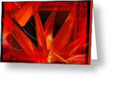 Bird Of Paradise Flower 5 Greeting Card