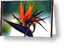 Bird Of Paradise Flower Fragrance Greeting Card