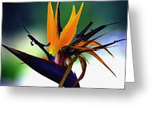 Bird Of Paradise Flower - Square Greeting Card