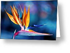Bird Of Paradise Greeting Card by Gunter Nezhoda