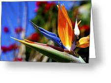 Bird Of Paradise Open For All To See Greeting Card