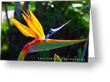 Bird Of Paradise Plant Greeting Card