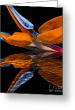 Bird Of Paradise Reflective Pool Greeting Card