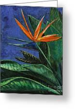 Bird Of Paradise Single Bloom Greeting Card