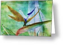 Bird Of Paradise Watercolor Greeting Card