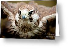 Bird Of Prey Flying Greeting Card