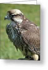 Bird Of Prey Greeting Card